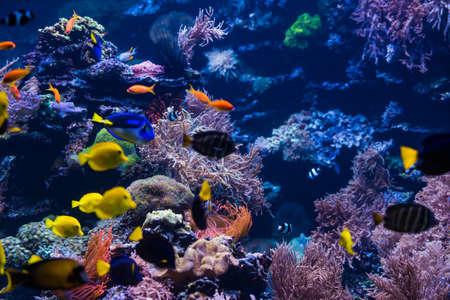 tropical Fish. Underwater world landscape Stock Photo