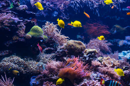 tropical Fish. Underwater world landscape 版權商用圖片