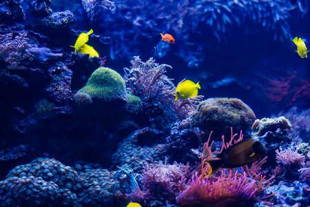 tropical Fish. Underwater world landscape Banque d'images
