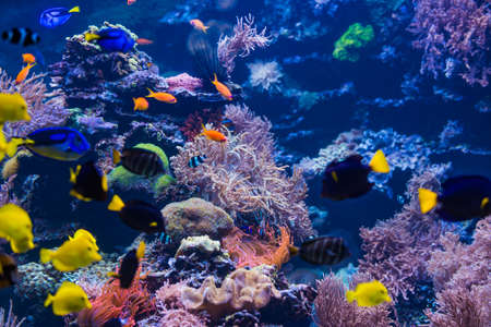 tropical Fish. Underwater world landscape 版權商用圖片