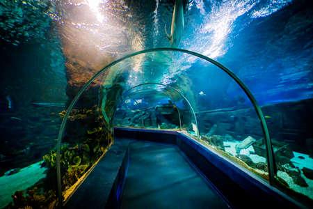 SOCHI, RUSSIA - DECEMBER 13, 2017: Sochi Discovery World Aquarium,  the largest aquarium in Russia Editorial