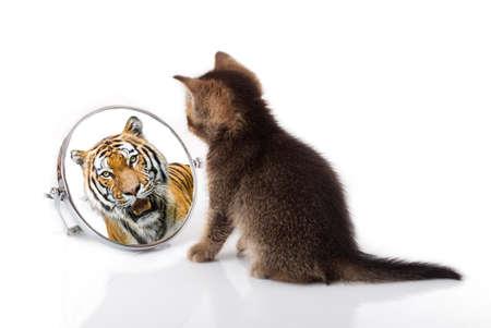 kotek z lustrem na białym tle. kotek patrzy w lustrzane odbicie tygrysa
