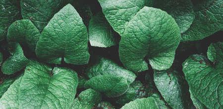 Texture de feuille verte. feuilles tropicales