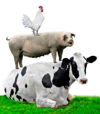 Farm animals. Cow, pig and chicken stand on each other Foto de archivo