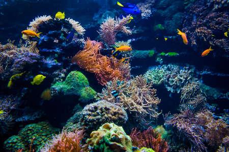 beau monde sous-marin