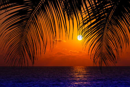 palm trees and amazing cloudy sky on sunset 版權商用圖片