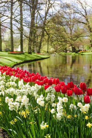 Garden landscape. 免版税图像