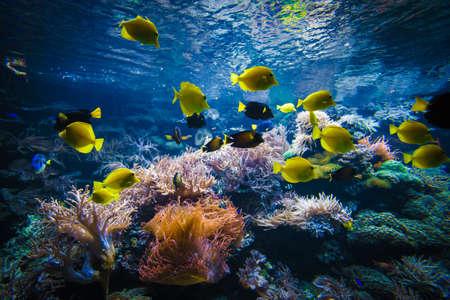 Poissons tropicaux sur un récif de corail