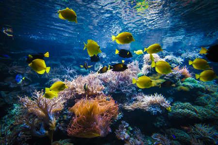 Tropische vissen op een koraalrif