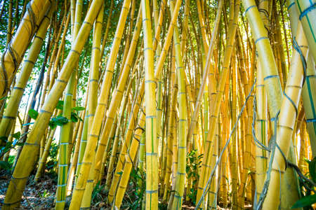 Bamboo sprouts forest Stock Photo