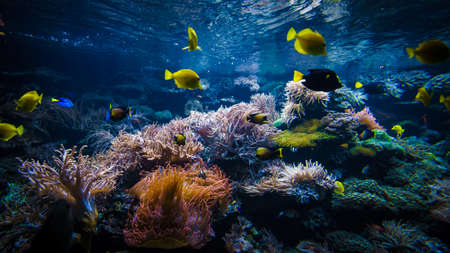 Underwater coral reef landscape  with colorful fish Banque d'images - 120594756