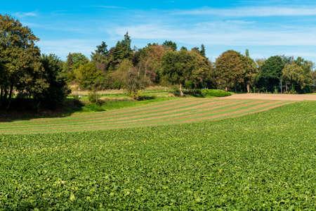 Farmland landscape in Europe