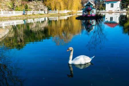 Beautiful pond with birds in Sochi. Russia Standard-Bild