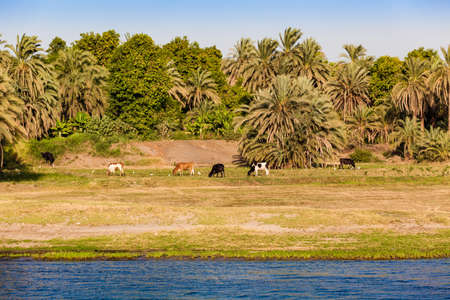 River Nile in Egypt. Life on the River Nile 写真素材