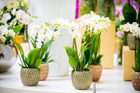 Schöne tropische Orchideenblüten in Töpfen