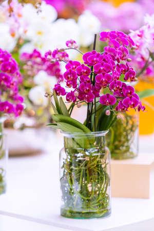 Beautiful plant orchid flower. beautiful flowers Фото со стока