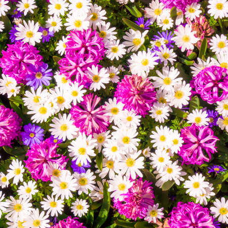 Different flowers. Floral decorated wall