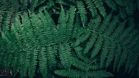 Green leaves pattern