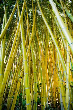 Natural Bamboo forest Banco de Imagens