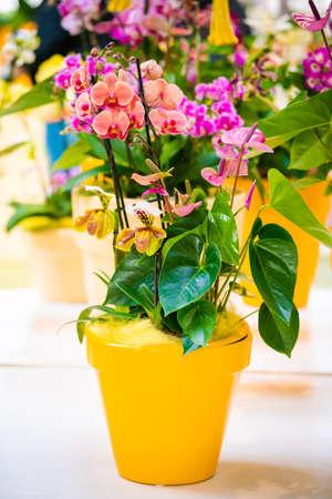 Orchid flower in garden. beautiful flowers