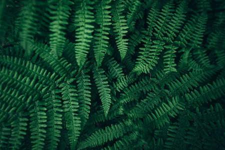 Dark green foliage nature