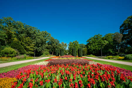 Lots of flowers in the park on a sunny day