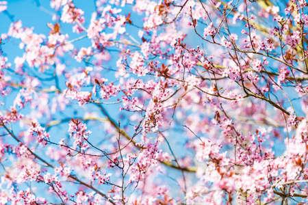 Bloom in spring, spring flowers