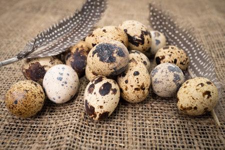 Fresh quail eggs. Rustic style