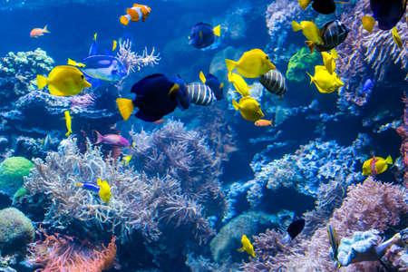 Unterwasserszene mit Korallenriff und tropischen Fischen Standard-Bild