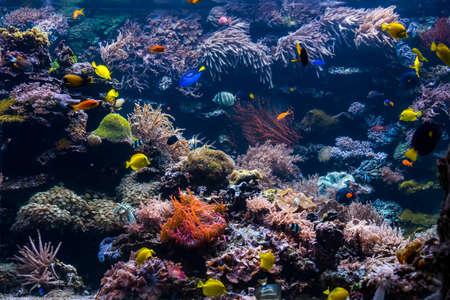 Escena submarina con arrecifes de coral y peces tropicales