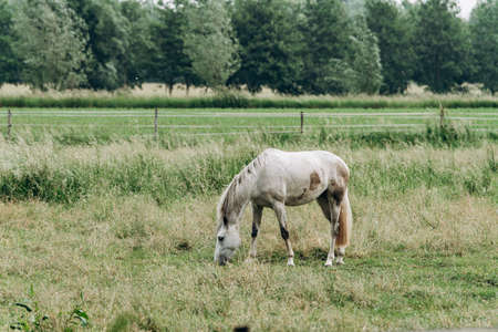 Portrait of a horse in the field in the long grass. Horse grazing in the long grass.