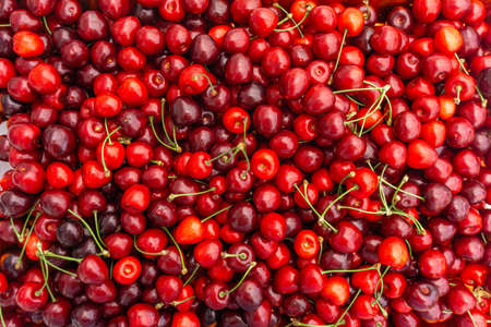Pile of ripe cherries with stalks and leaves. Large collection of fresh red cherries. Ripe cherries background.