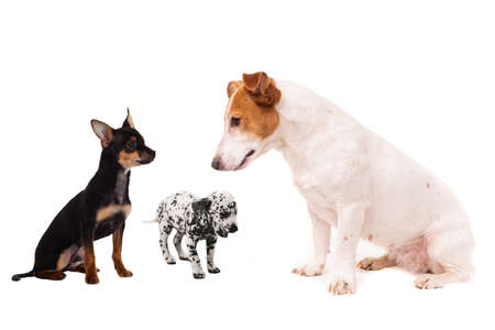 Group of dogs. Close-up of puppies, isolated on white