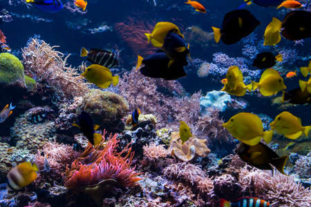 paesaggio sottomarino della barriera corallina con pesci colorati e vita marina