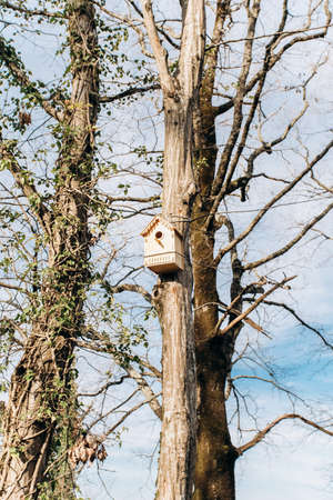 A Bird House in a forest on a tree. The second name-birdhouse