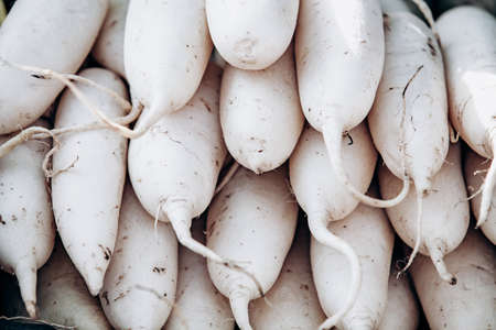 Beaucoup de radis blanc daikon. Les radis daikon blancs se superposent.
