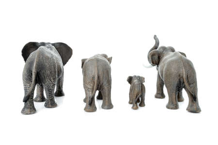 Elephant family. Backside of the  elephant isolated on white background.  Фото со стока