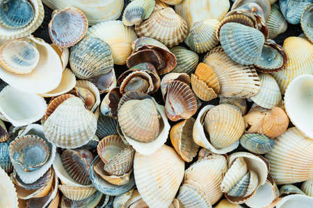Mixed colorful sea shells as background Stock Photo