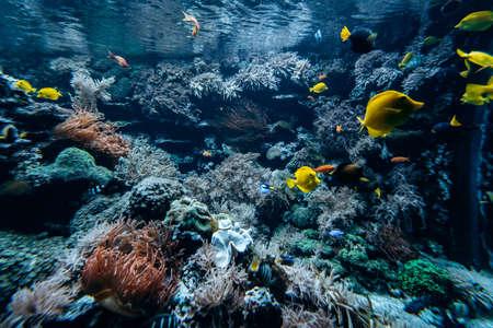 Kolorowa podwodna skalista rafa przybrzeżna z koralami i gąbkami oraz małymi tropikalnymi rybkami pływającymi w błękitnym oceanie Zdjęcie Seryjne