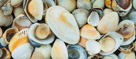 beautiful background and texture of nature sea shell pattern Stock Photo