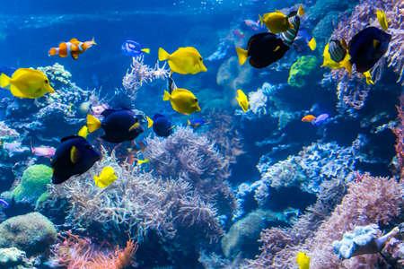 Paisaje submarino de arrecifes de coral con peces de colores y vida marina.
