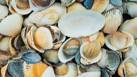Mixed colorful sea shells as background. Sea Shell Texture Foto de archivo