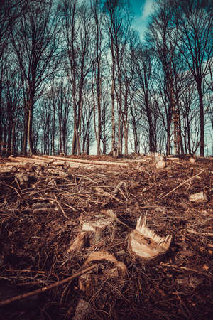 Forest deforestation tree concept, logging. Pile of firewood in deciduous forest