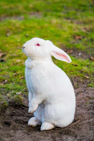 white rabbit playing in the garden