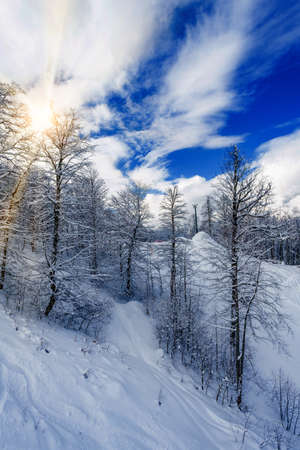 beautiful snowy winter landscape panorama with forest and sun. winter sunset