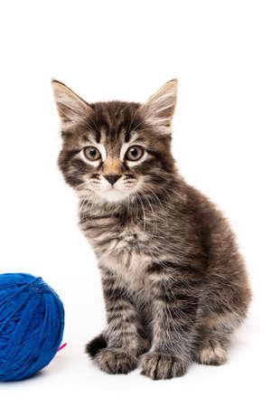 Kätzchen mit Kugeln aus Fäden. kleines Kätzchen auf weißem Hintergrund.