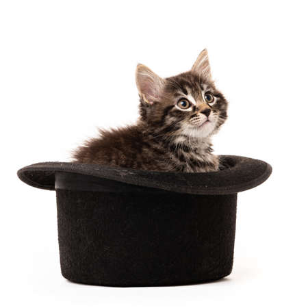 Little kitten sitting in a hat isolated on white background
