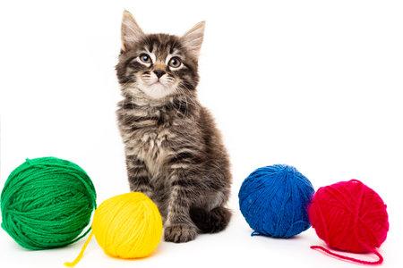 kitten with balls of threads. little kitten on white background. 免版税图像