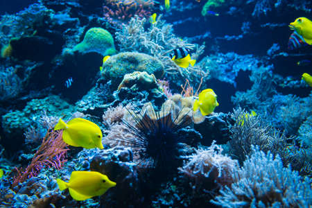 Tropical Fish on a coral reef. colorfull fishes in dark deep blue water 免版税图像