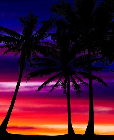 Orange dramatic sunset with palm trees